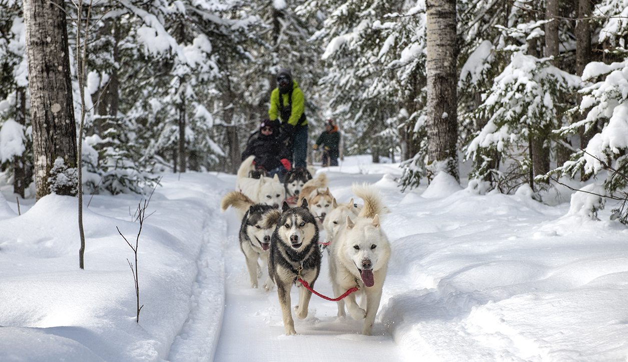 Expédition traineau à chien Côte-Nord