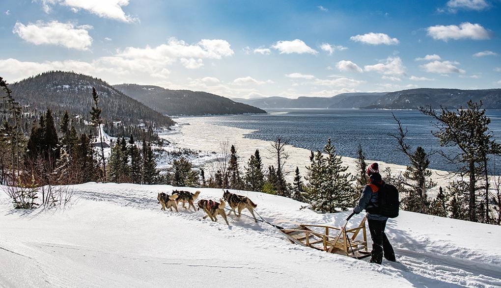 Traineau à chien Fjord Saguenay