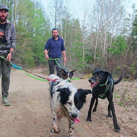 Cani-rando une activité à ne pas manquer !