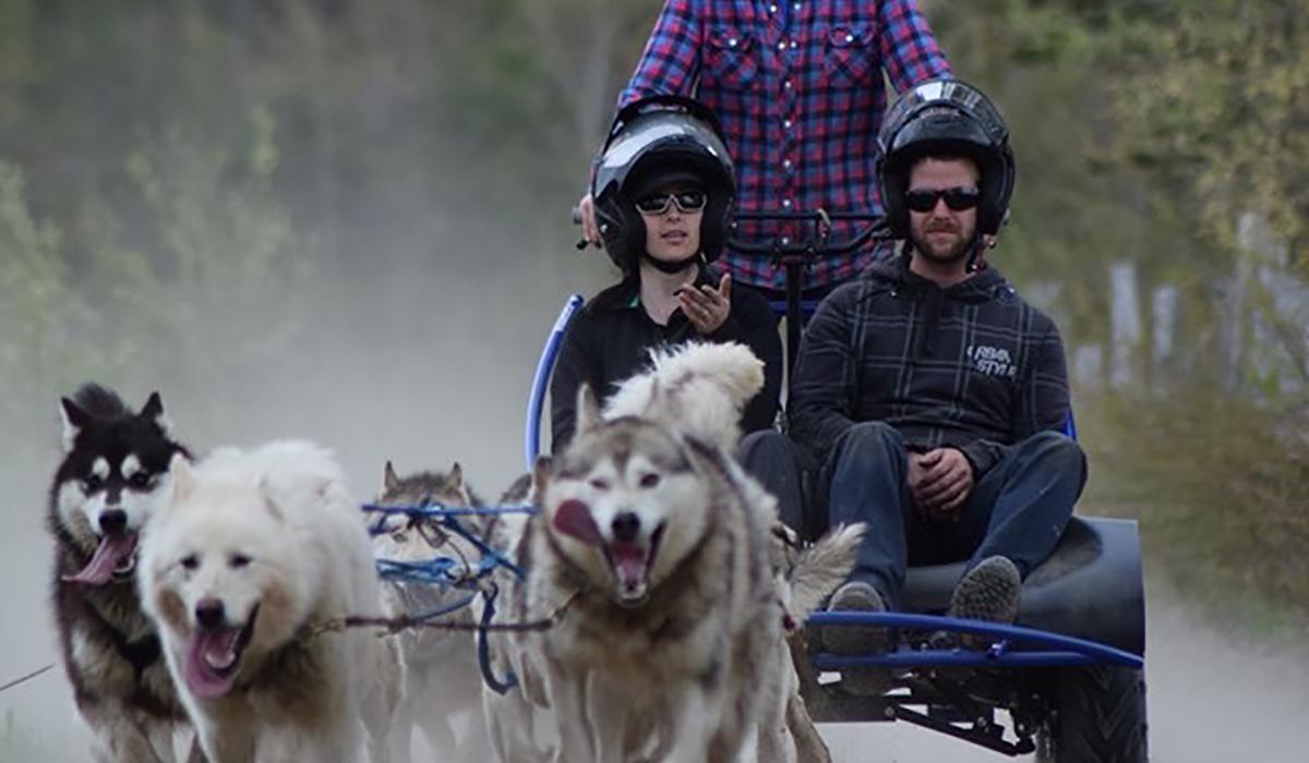 Cani-kart avec nos chiens de traîneau