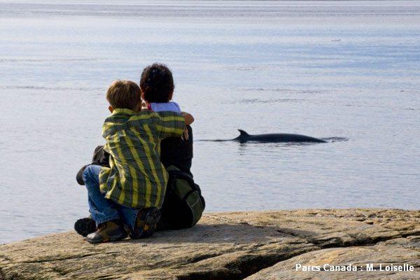 Observation baleines rivage