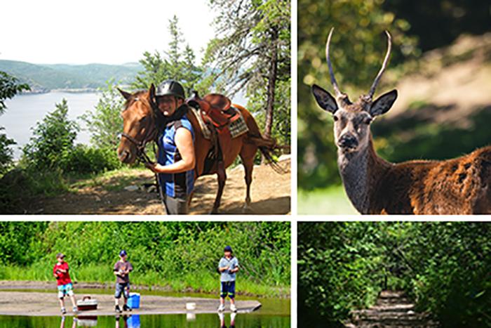 Passeport #5: Côte-Nord - Équitation et visite des animaux